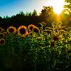 沈みゆく夏の陽