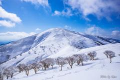 モフモフの丘_竜ケ岳