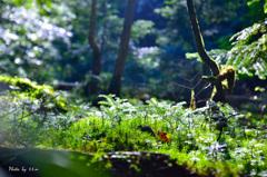 八ヶ岳の森_新たな命の芽吹き