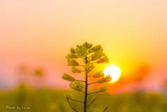 輝く季節へ
