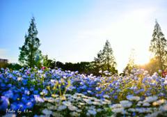 花の広場の夕景