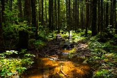 木漏れ日と命の芽吹き