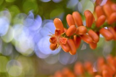 花より玉ボケ