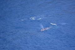 クジラを見に