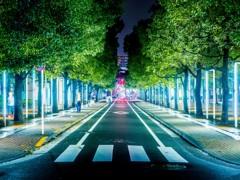 大森ベルポート横の並木道の夜景