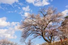 吉野梅郷・最後?の春
