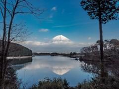 冬支度の田貫湖からの富士