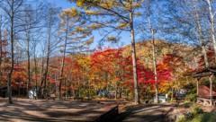 紅葉に包み込まれた笛吹キャンプ場