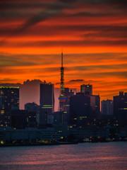 妖々しく空を染める夕焼けに覆われた東京タワーと芝浦方面の高層ビル群