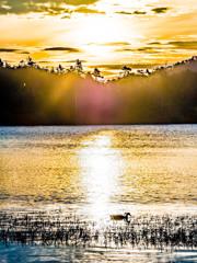 白駒池の朝景#6 エピローグ