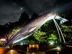 なんだ、この巨大なクジラは!