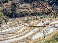 千枚田の春