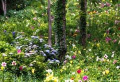 紫陽花と百合