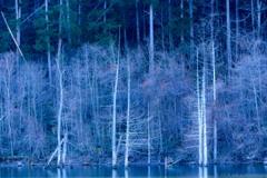 自然湖のほとり