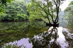 三河湖の水辺