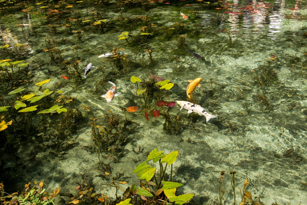 小さな池の眺め
