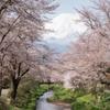 新名庄川の春