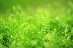 小さな苔たち