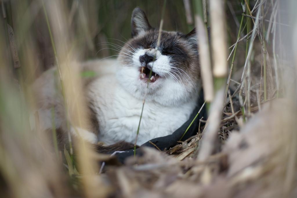 茂みの中で高笑い