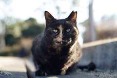 サビ猫一番