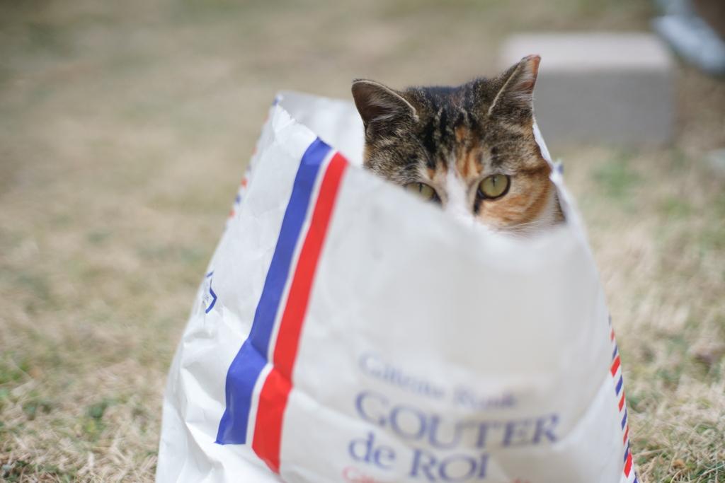紙袋は捨てずにリサイクル
