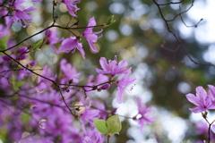 光源氏と紫の上