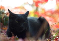 黒猫パレット