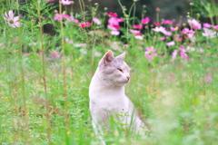 秋桜の風に吹かれて