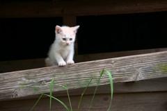 子猫のマーチ