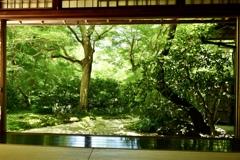 京都深緑1