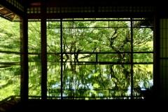 京都深緑2