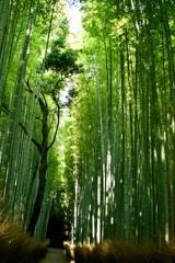 京都深緑3