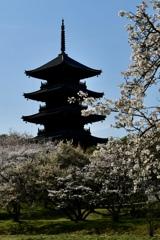 2020桜・古塔