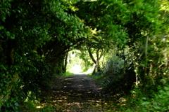 佐久島旅行③ 森の中の小径