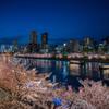 天満橋 桜夜景