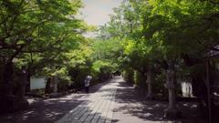 新緑の参道…