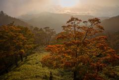 おぼろげな秋 -初秋の東大台ー