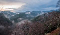 吉野山 咲き始め…