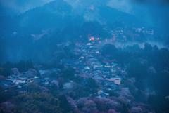 桜道 蔵王堂夜明け前