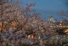 夕暮れ桜と天守閣