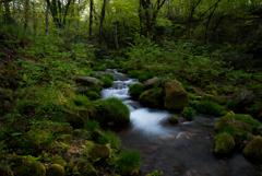 #水の森を歩く…