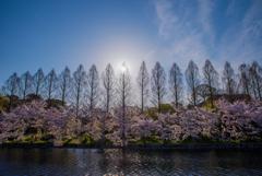 春・・・の光