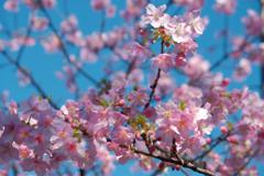 春が舞う…