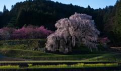 春光とどく古木の情趣