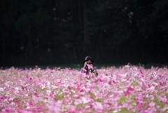 秋桜 を 撮る…