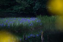 森閑とした夜明に
