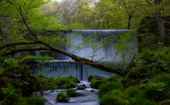 新緑と森の息吹