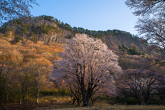 山桜彩々…