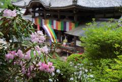 龍蓋寺の趣