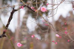 春… ちょっと…